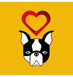 cute dog pet with french bulldog heart background vector image