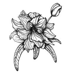 Flower line art vector
