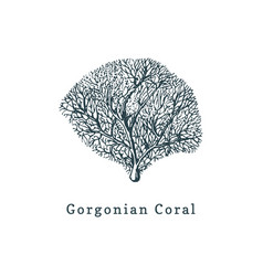 Gorgonian coral drawing of sea vector
