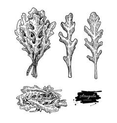 Arugula leaf hand drawn set vector