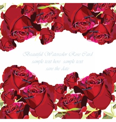 Delicate red rose flowers card vector