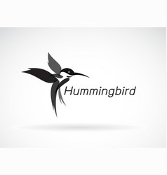 hummingbird design on white background wild vector image