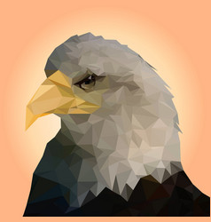 isolated bald eagle on background vector image