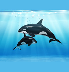 killer whale in sea realistic composition vector image
