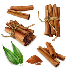 realistic cinnamon sticks set vector image