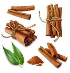 Realistic cinnamon sticks set vector