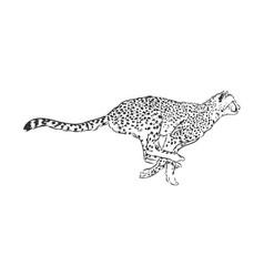 Running cheetah wild african cat sketch vector