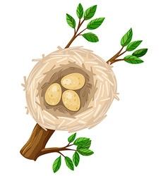 Three eggs in bird nest vector