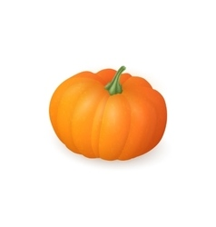 Realistic pumpkin isolated on white background vector