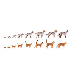 set pets growth stages flat vector image