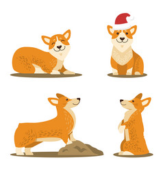 Corgi dog set of four pictures vector