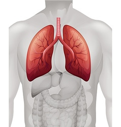 Lung cancer diagram in human vector image