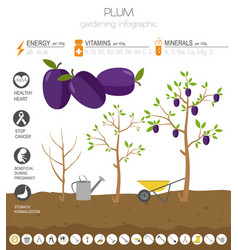 Plum beneficial features graphic template vector