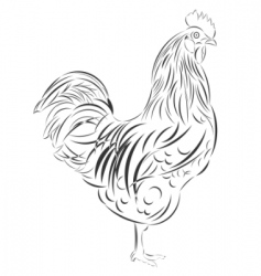 vector sketch of the cock vector image