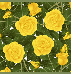 yellow rose and green leaves on white background vector image