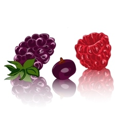 Berries isolated on white backgraund vector