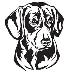 Decorative portrait entlebucher mountain dog vector