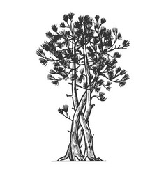 Binded pine tree sketch engraving vector