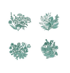 hand drawn medical herbs bouquets set vector image