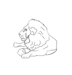 lion lies lines vector image