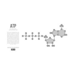 abstract silhouette polygonal molecule atp acid vector image