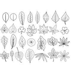 Line leaves vector