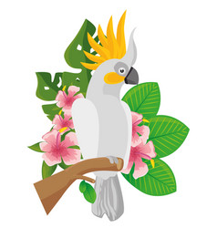 Parrot tropical bird icon vector