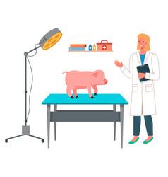 Veterinarian woman makes a pig inspection vector