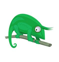 green chameleon sitting on branch on white vector image