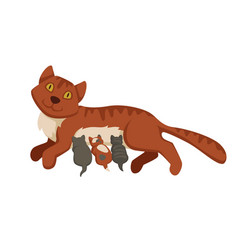 Pet cat feeding or nursing kittens babies vector