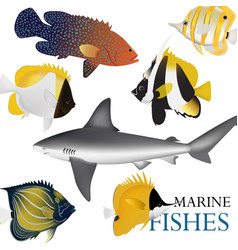 01 marine fish-01 vector image