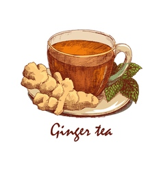 Colored hand drawn cup ginger tea vector