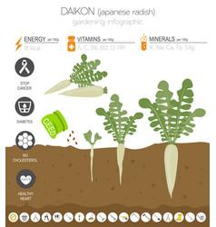 Daikon beneficial features graphic template vector