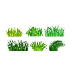 Green grass in tuftrs set vector