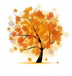 maple tree autumn leaf fall vector image