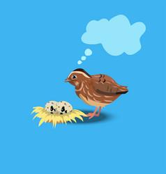 portrait of a cute quail vector image vector image
