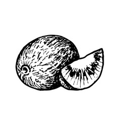 Ink drawing kiwi vector