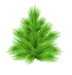 lush fir tree isolated on white vector image