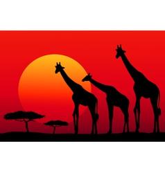 African Safari at Sunset vector image