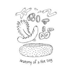 anatomy of a hot dog vector image