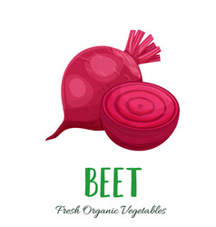 Beet vegetable vector