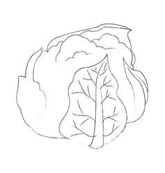 Cauliflower vegetable icon image vector