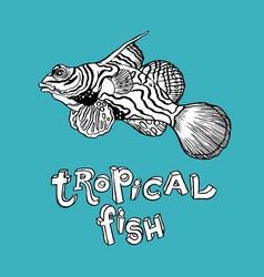 Tropical fish - hand drawing vector