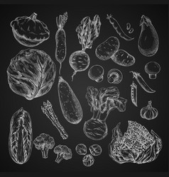 vegetable bean and mushroom sketch on chalkboard vector image