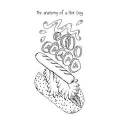 anatomy of a hot dog vector image