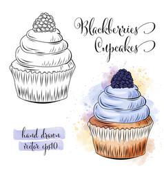 Beautiful hand drawn watercolor cupcakes with vector