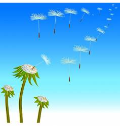 dandelions seeds on the wind vector image