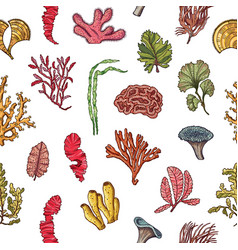 hand drawn seaweed elements pattern or vector image