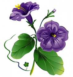 petunia flower vector image vector image