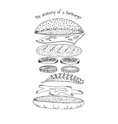anatomy of a hamburger vector image